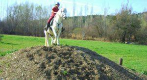 stage equitation