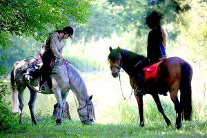 Randonnée à cheval et éthologie dans le Jura, 12-16 ans