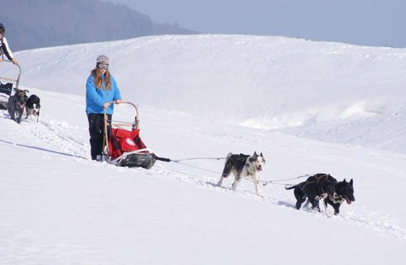 ski joering chiens traineaux vercors | Destinations Cheval