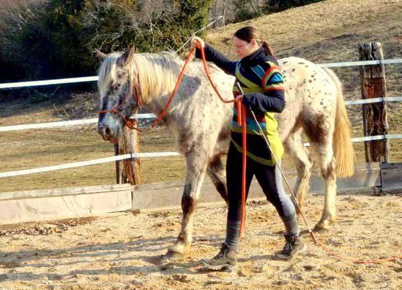 ethologie   destinations cheval
