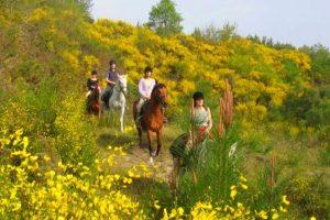Stage d'initiation à l'équitation et balade à cheval dans les Landes