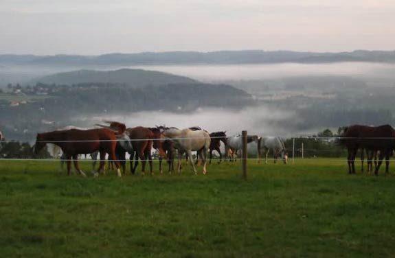 rando cheval sportive morvan | Destinations Cheval