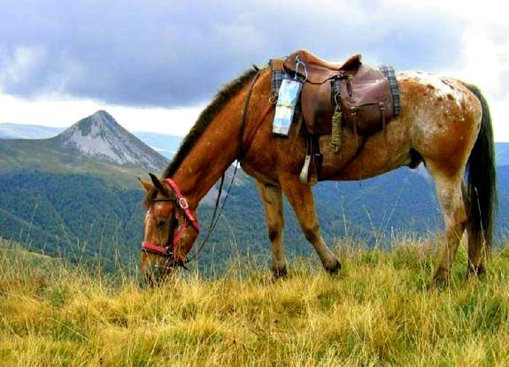 randonnee cheval auvergne | destinations cheval