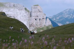 Randonnée à cheval, les plateaux du Vercors