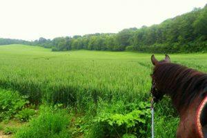 Week end randonnée à cheval dans le Vexin