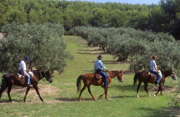 randonnee equestre tourisme luberon | Destinations Cheval