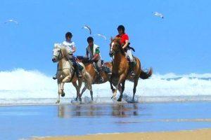 Randonnée à cheval dans les Landes