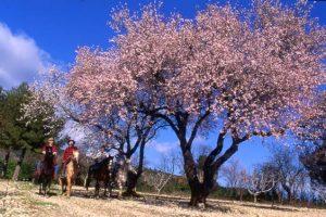 Séjour équestre et tourisme en Provence