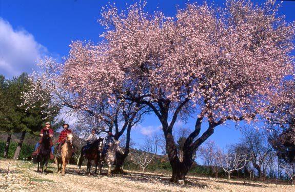 sejour equestre tourisme provence | Destinations Cheval