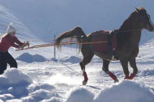 Ski-joëring et chiens de traineaux dans le Vercors, 11-14 ans