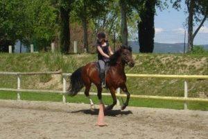 Stage equitation et balades à cheval en Provence