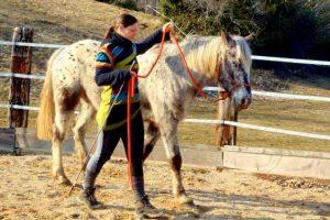 Stage éthologie et cheval dans le Jura