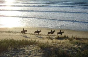 weekend cheval initiation gironde   Destinations Cheval