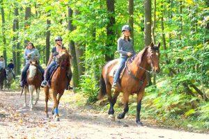 Initiation cheval dans le Vexin