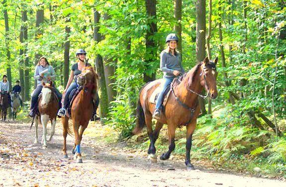 initiation au cheval | destinations cheval
