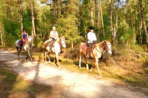 Stage d'équitation pour débutant dans la Sarthe