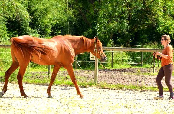 ethologie cheval sologne | destinations cheval