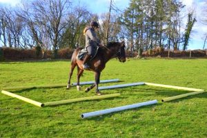 Stage TREC cheval en Bretagne