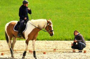 stage trec | destinations cheval