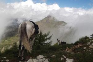Randonnée à cheval dans les Alpes entre France et Italie