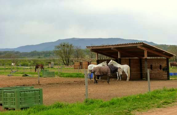 stage équitation en PACA | Destinations Cheval