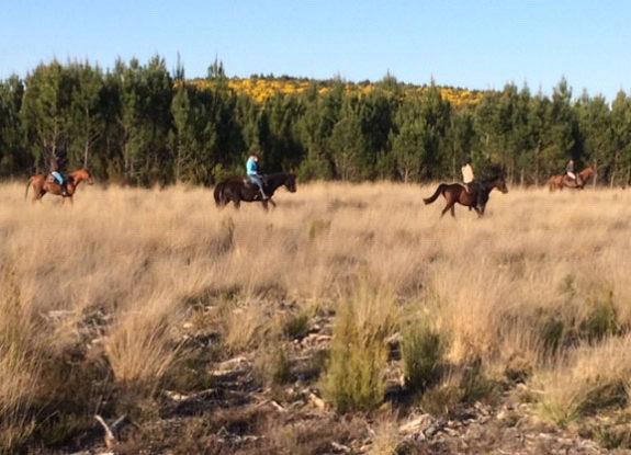 vacances à cheval dans les Landes - Destinations Cheval